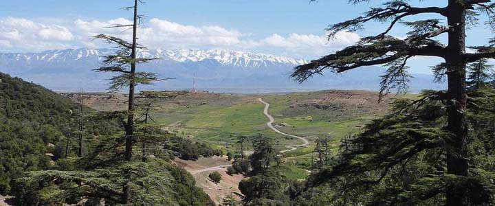 A Peek Through the Majestic Cedar Trees across the High Plains to The Snow-Capped High Atlas